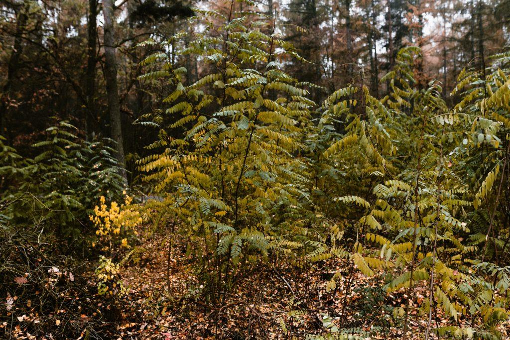 kaboompics_Acacia tree